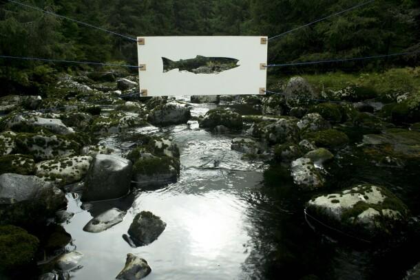 Ikke fisk 2