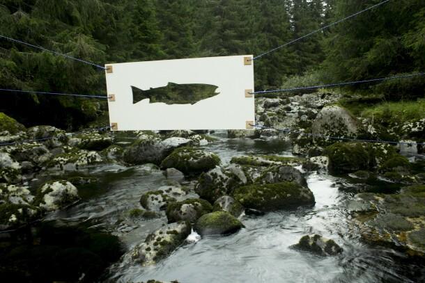 Ikke fisk 3