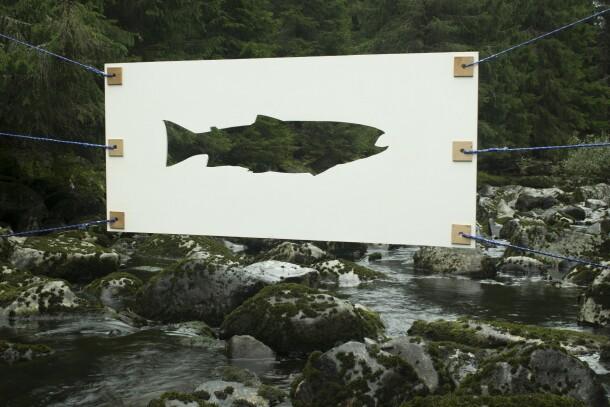 Ikke fisk 4